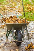 Autumn Cleaning In The Garden