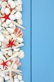Starfish and white sea shell selection over wooden blue background.