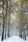 Snowstorm In Autumn City Park
