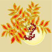 Rowanberry And Sun Vector