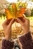 holding up autumn leaf