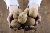 Dirty Potatoes Are Held In Hands