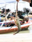 stock photo of lobster boat  - lobster was brought up by a fishing boat to Koh Pan Yee - JPG