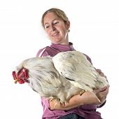 Brahma Rooster And Girl