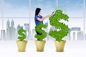 Woman Manage The Growth Of Money Tree