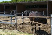 stock photo of thoroughbred  - a manege of horses with some thoroughbreds - JPG