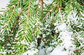 White artificial  snow Christmas tree