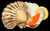 picture of scallop-shell  - Raw king scallop clam and shell with lemon on a black background - JPG