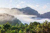 Tropical Mountain Mist In Thailand