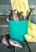 Raw Fish In A Bucket