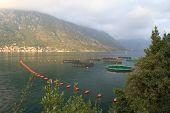 Fish Farming In The Bay Of Kotor.