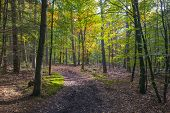 Beech forest in sunlight at fall