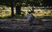 Red Deer Awakening