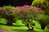 Beautiful green garden lawn with pink bushes