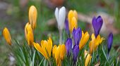 Bright Spring Flowers