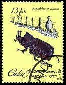 Vintage  Postage Stamp. Beetle Homophileurus Cubanus.
