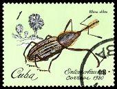 Vintage  Postage Stamp. Beetle Rhina Oblita.
