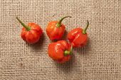 picture of scorpion  - Trinidad Moruga Scorpion Spicy chili in the world on a brown background - JPG