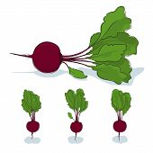 Beet root vegetable on a white background