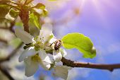 Spring nature