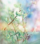 Budding spring leaves