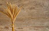 Barley And Wheat