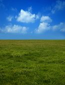 The green field on the background of blue sky.