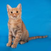 Ginger Kitten Sitting On Blue