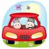 Two Donkeys In A Car