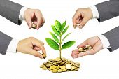picture of golden coin  - Hands of businessmen giving coins to a tree growing on golden coins - JPG