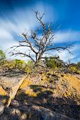 stock photo of sagebrush  - Clouds streaking behind a dead tree on a sunny morning in northern New Mexico - JPG