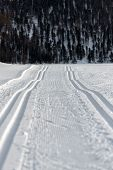 foto of nordic skiing  - Double track Nordic skiing in the winter season
