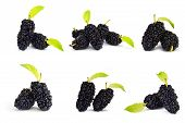 foto of mulberry  - Collection mulberry fruit isolate on white baackground - JPG