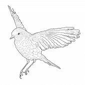 pic of spread wings  - Soaring bird with spread wings - JPG