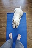 picture of yoga mat  - Dog on yoga mat helps do yoga - JPG