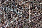 image of dry grass  - horizontal image texture of dry grass - JPG