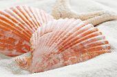 Seashells and starfish on white sand.  Macro with shallow dof
