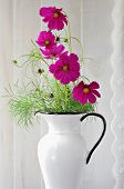 Freshly cut cosmos in antique pitcher near window.  Edge of lace curtain included in composition for added charm.