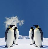 Four Penguins in Antarctica