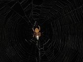 Animals - Spider And Web