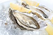 stock photo of oyster shell  - raw oysters with lemon and ice - JPG