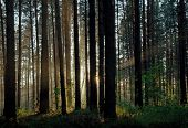 sunset in the misty forest