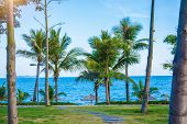 Many Beautiful High Palm Trees Grow Near, Aleya Palms, Tropical Island And Beautiful Trees Grow To T poster