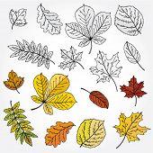 Conjunto de otoño hojas
