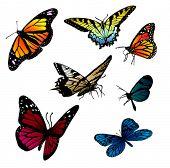 set of different butterflies vector