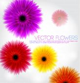 eps10 flowers