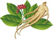 A ginseng root and a part of the plant.