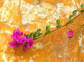 Flower On A Brick Background
