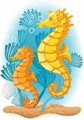 Vector illustration - Two seahorses  on the seabed
