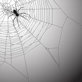 A Spiderweb Vector Illustration with Spider